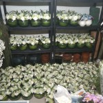 Preperation Chiller - Satu Indonesia Bank BCA Ritz Carlton Pacific Place by Gria Florist